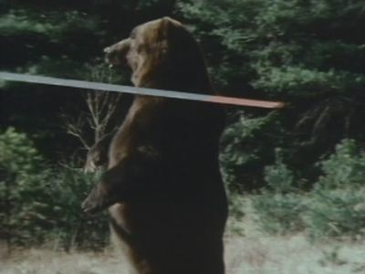 grizzly_02