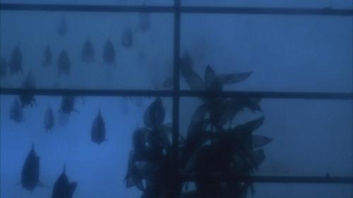 piranhas 03