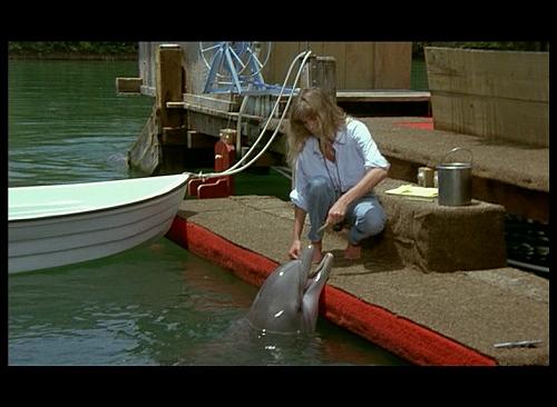 shark (1)